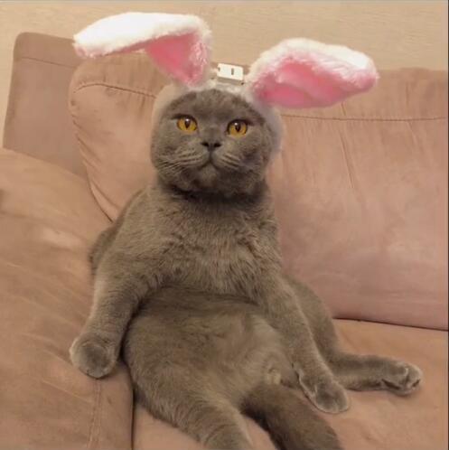 我想要的不多歌词_抖音戴兔耳朵的猫原图_兔耳朵小猫出处_软吧
