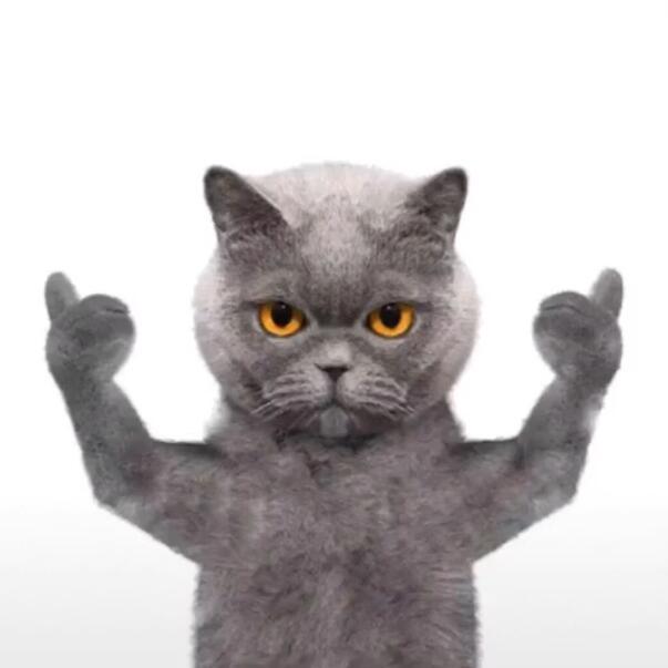抖音朋友圈背景猫图片英短蓝猫是一种非常可爱的猫咪品种.