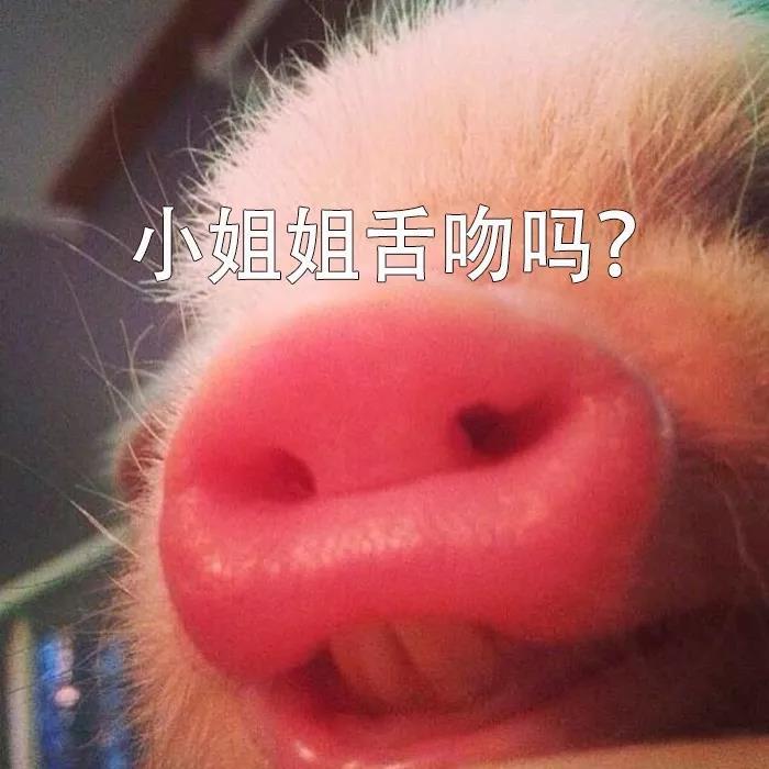舌吻吗一只猪的表情包
