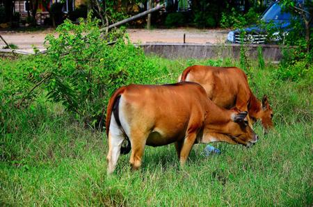 抖音老牛吃嫩草图片