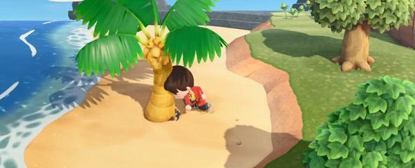动物森友会怎么移植树